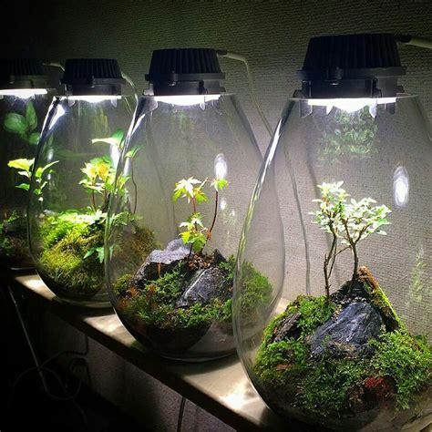 1000 ideas about aquarium deko on pinterest terrariums