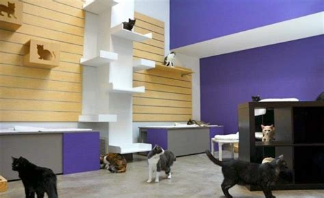 cat room friends for no kill animal adoption rescue shelter