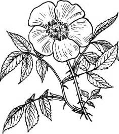 black outline drawing plants flower white flowers
