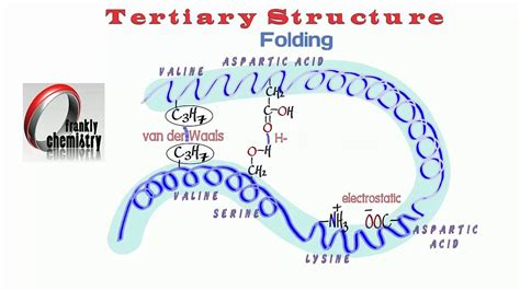 protein tertiary structure amino acids 9 the tertiary structure of a protein
