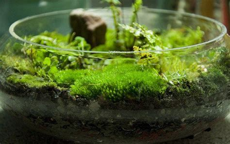 diy terrarium moss graffiti  moss  succulent