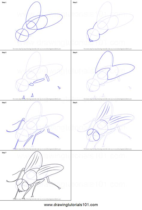 how to draw a fly printable step by step drawing sheet