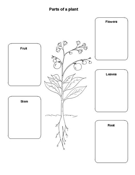 Plant Parts Worksheet by Collection Of Plants We Eat Worksheet Bluegreenish