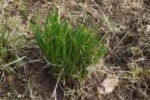 garten pflanzen seite 12 frag mutti