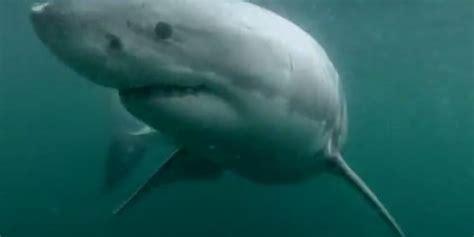 gopro shark gopro shark attack jumps into sydney harbour