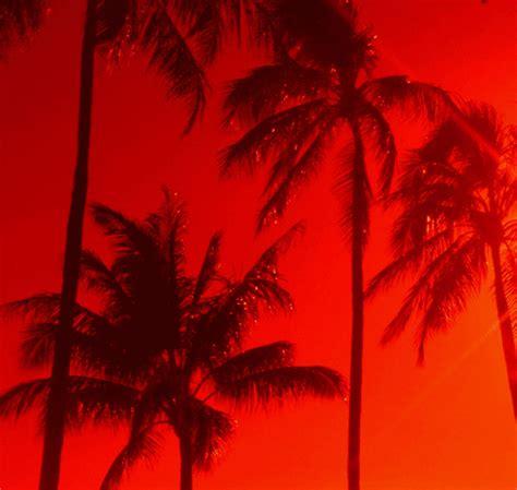 large photo themes tumblr palm trees tumblr theme images