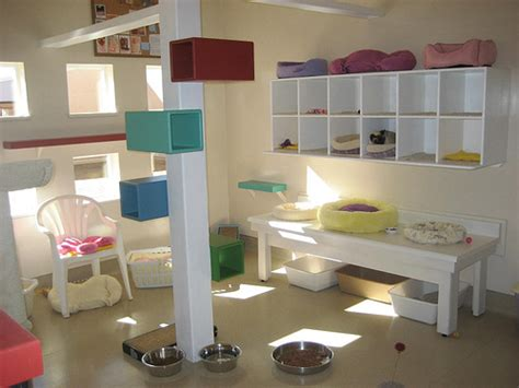 design works home is where the cat is パステルカラーのかわいい猫部屋 猫と暮らす部屋 インテリにゃ naver まとめ