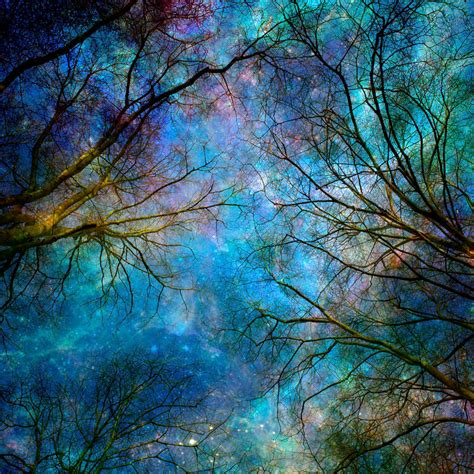 Black Friday Home Decor by Nature Photography Winter Trees Stars Night Sky
