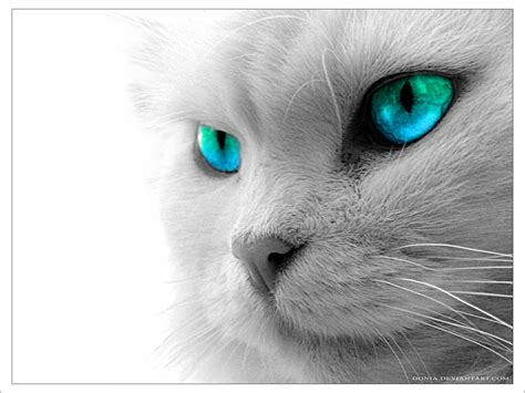 wallpaper de chat kitty cats wallpaper 32965081 fanpop