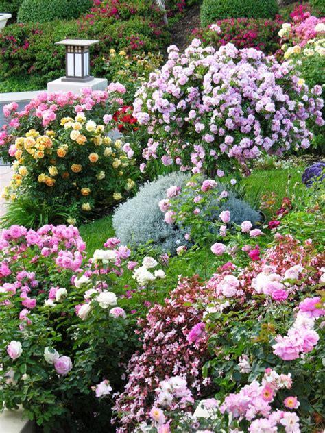 cottage garden roses cottage garden designs we hgtv