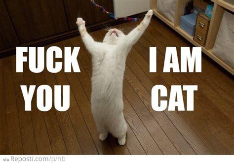Fuck You Cat Meme - i am cat reposti