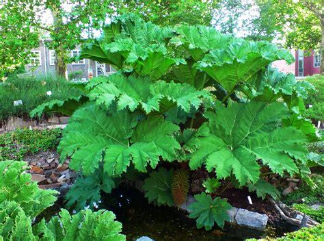 piante da giardino resistenti al gelo piante per esterno resistenti al freddo storie cactus