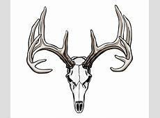 buck deer skull clip art - Clipground Whitetail Buck Drawings