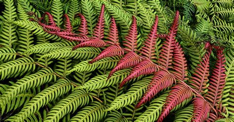 definition of pattern in nature patterns in nature www pixshark com images galleries