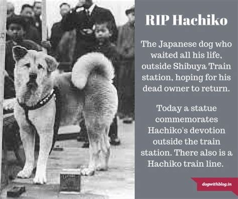 Hachiko Movie Review Hachiko Movie Summary