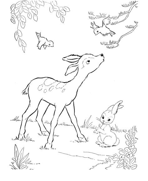 printable deer coloring pages  kids crafts