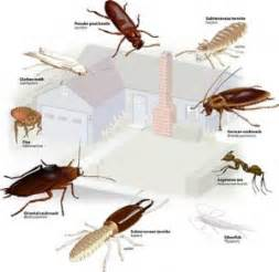 House Pest Control by Finding Reliable Pest Control Company Emarketing Prlog