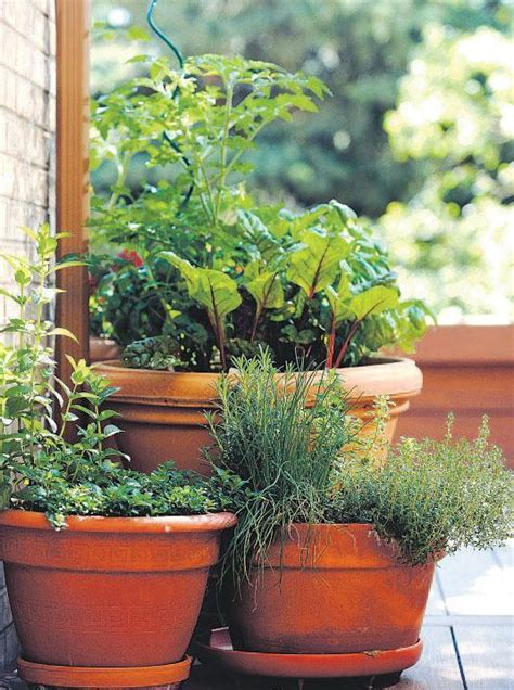 rhubarb container gardening how container gardens can convert your balcony or patio