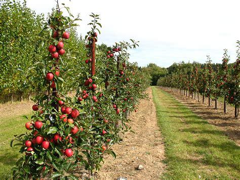 trees bearing fruit apple trees bearing fruit 169 stephen craven