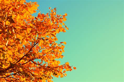 autumn color five simple ways to celebrate the autumn equinox