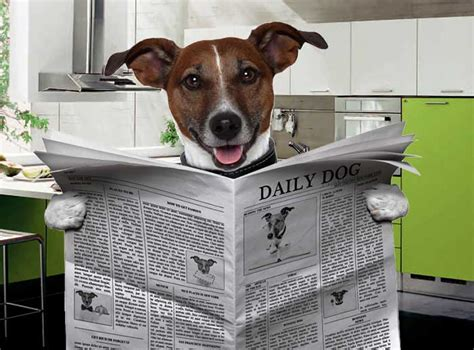 dogs in the news home behavior obedience by bark busters
