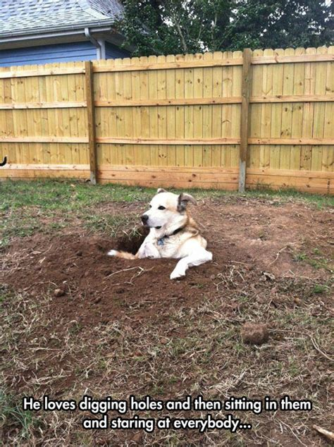 why do dogs dig holes in the backyard enjoying a job well done the meta picture