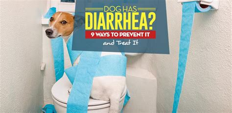 why is my puppy diarrhea has diarrhea 9 ways to prevent and treat it