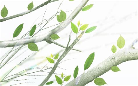 branch wallpaper wallpaper with trees and branches wallpapersafari