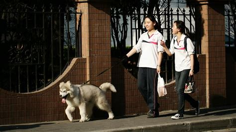 Dogs Giveaway Adelaide - dog owner pain in china crackdown the advertiser