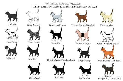 what breed are black cats cats types