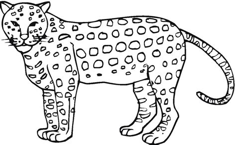 cheetah to coloring page cheetah coloring page getcoloringpages com