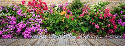 piante ricanti terrazzo fiori profumati da balcone 28 images le piante da