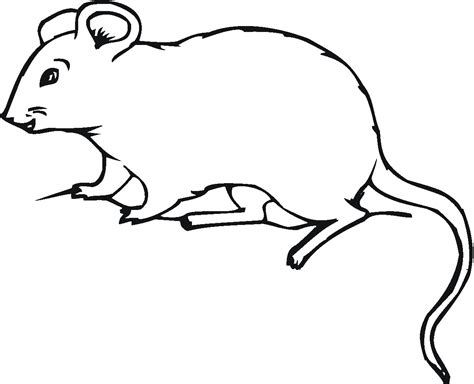Free Printable Mouse Coloring Pages For Kids A Coloring Page
