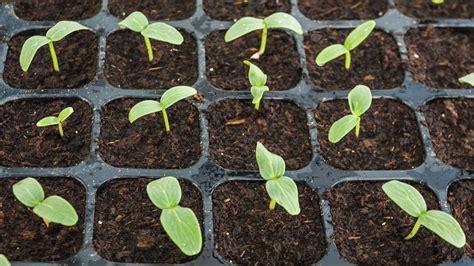 growing seedlings youtube