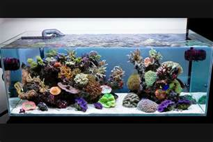 Aquarium For Home 27 Cool Aquariums For Your Home