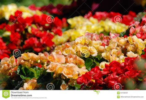 variety of flowers for garden gardens of color variety of flowers stock photo