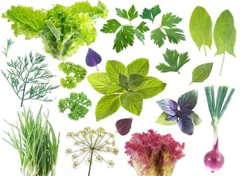 herb grower s sheet pros and cons of herbal plants for use b2b news b2b products information