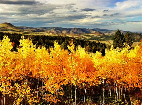 fall colors colorado the fall colors of colorado and a community idea andrew hyde