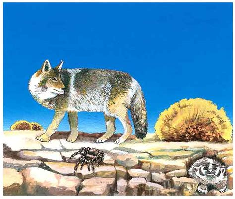 imagenes de animales que viven en el desierto el desierto