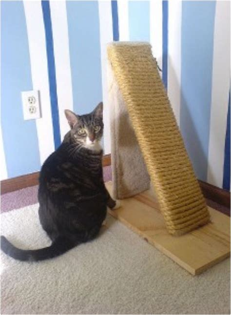 Jo In Scratching Pad best 25 cat scratching post ideas on diy cat