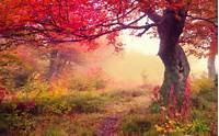 Autumn Forest Background Widescreen Desktop