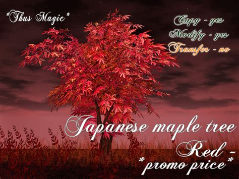 maple tree price second marketplace thus magic japanese maple tree promo price