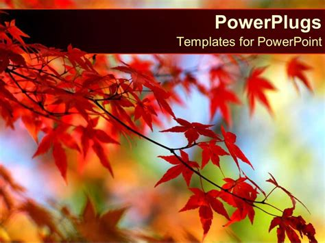 Powerpoint Template Red Leaves On Orange Tree In Autumn With A Blue Sky 30625 Free Autumn Powerpoint Templates
