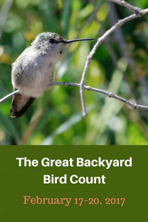 Great Backyard Bird Count Bird Activities Growing With Science