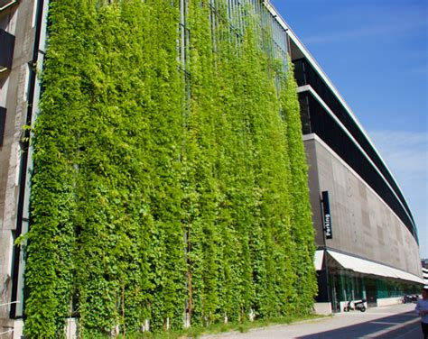 living roofs and walls green walls are essentially a living cladding system