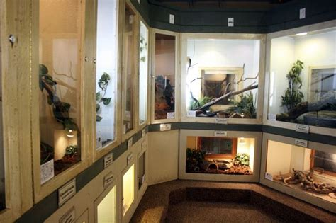 Reptile Rooms by Reptile Room Reptile Room Reptile Room And