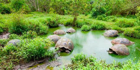 galapagos islands animals galapagos wildlife why so special