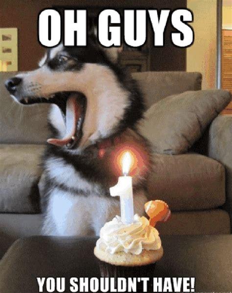 Birthday Cake Dog Meme - dog birthday quotes quotesgram