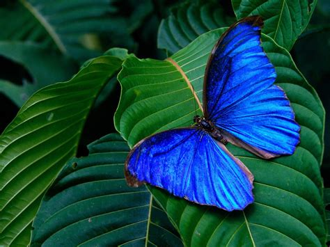 blue wallpaper with butterflies blue butterfly wallpaper funny animal