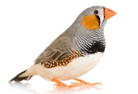 imagenes de aves sin fondo p 225 jaros el mini zoo